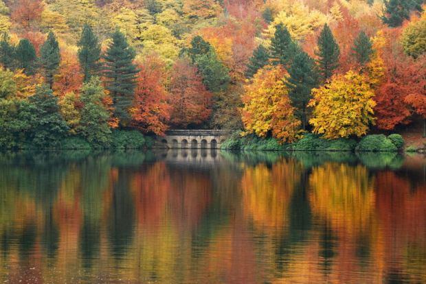 Autumn Refiection