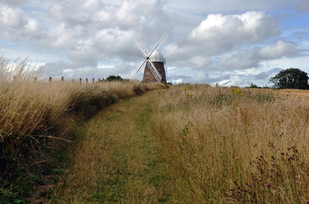A Path To A Windmill